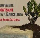La D.O. Montsant se planta en Barcelona (12 de noviembre)