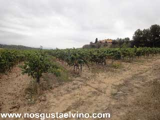 can bonastre wine resort 2